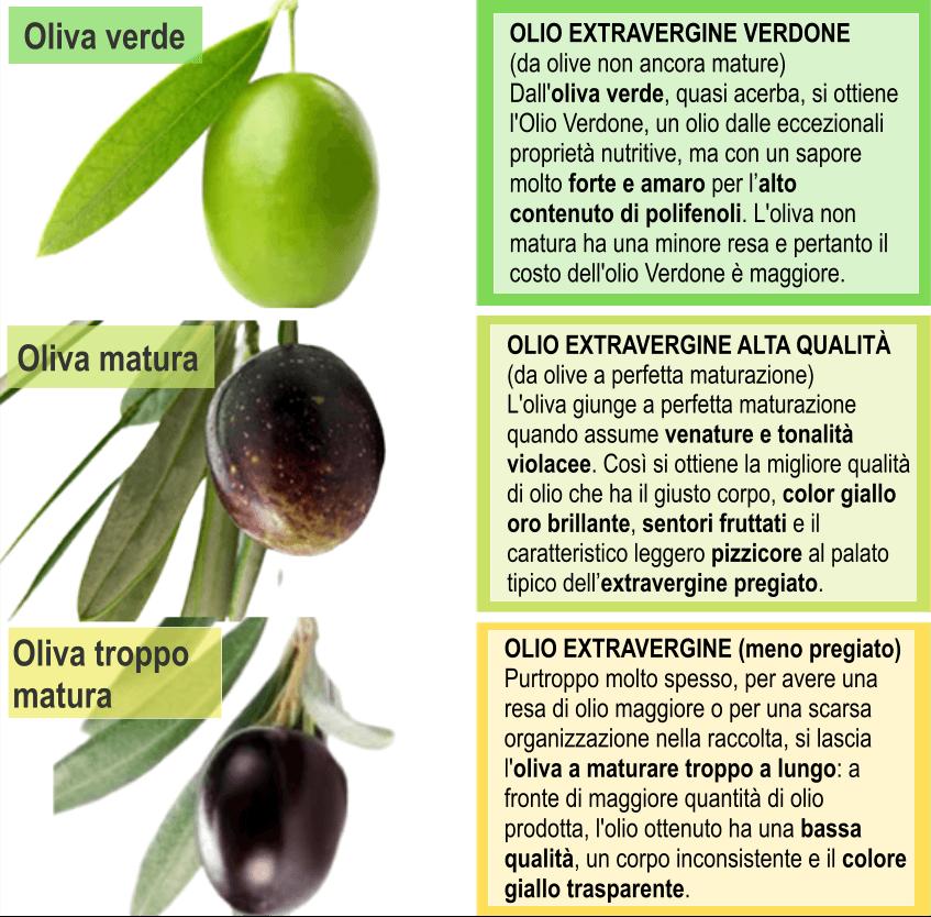 tipi di olive da olio extravergine